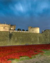 Tower of London Sea of Poppies wall mural thumbnail
