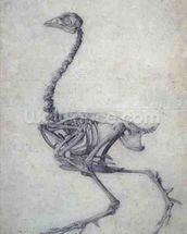 The Skeleton of a Fowl, from the series A Comparative Anatomical Exposition of the Structure of the Human Body with that of a Tiger and a Common Fowl, 1795-1806 (graphite on paper) wall mural thumbnail