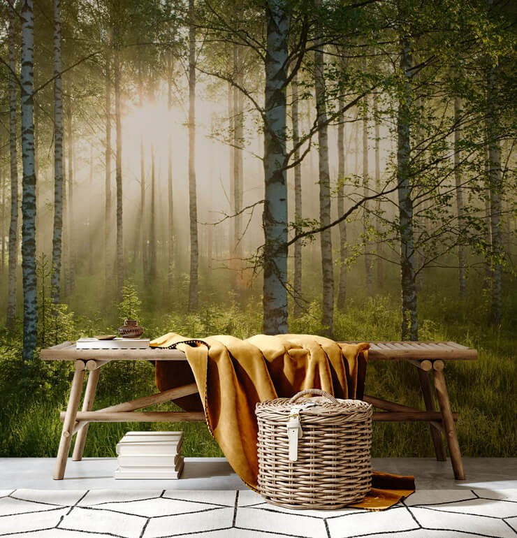 sunlit white birch tree woodland wallpaper with wooden bench and mustard throw