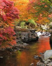 Autumn Colours, Japan mural wallpaper thumbnail