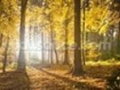Bright Forest Sunlight wall mural thumbnail