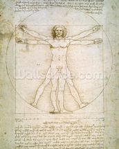 The Proportions of the human figure (after Vitruvius), c.1492 (pen & ink on paper) mural wallpaper thumbnail