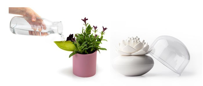 watering plant leaf and white lotus cotton bud holder