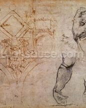 Scheme for the Sistine Chapel Ceiling, c.1508 (pen & ink and chalk on paper) wall mural thumbnail