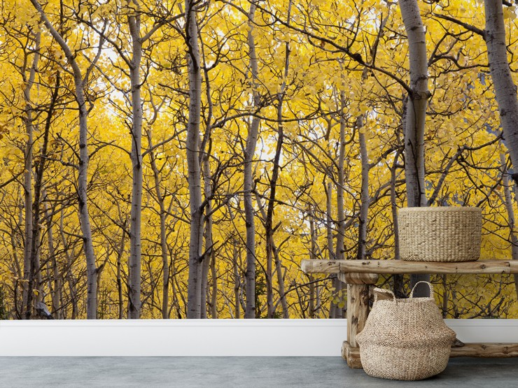 forest trees with yellow leaves wallpaper in room with wicker baskets