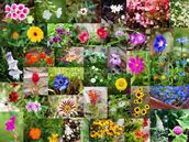 Summer Flower Collage wall mural thumbnail