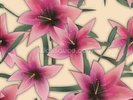 Pink Lilly wall mural thumbnail