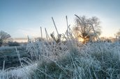 Frozen Grass in Richmond Park wall mural thumbnail