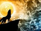 Wolf Howling in Silhouette wall mural thumbnail