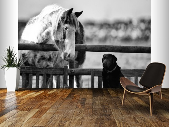 Best Mates Horse and Dog