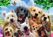 Dogs Selfie wallpaper mural thumbnail