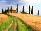 Tuscany Cypress Trees wall mural thumbnail