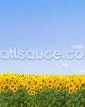 Sunflowers wall mural thumbnail