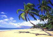 Palm Trees On A Beautiful Tropical Beach wallpaper mural thumbnail