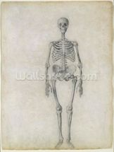 The Human Skeleton, anterior view, from the series A Comparative Anatomical Exposition of the Structure of the Human Body with that of a Tiger and a Common Fowl, 1795-1806 (graphite on paper) wallpaper mural thumbnail