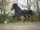 Flying Black Stallion wall mural thumbnail
