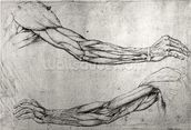 Study of Arms (pen & ink on paper) wall mural thumbnail
