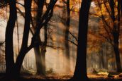Autumn Light mural wallpaper thumbnail