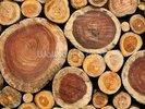 Pile of Logs wall mural thumbnail
