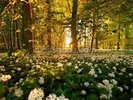 Beautiful Sunlit Forest Floor wall mural thumbnail