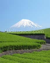 Snow Capped Mount Fuji wall mural thumbnail