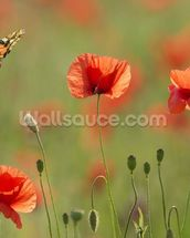 Poppies and Butterflies wall mural thumbnail