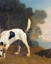 Foxhound on the Scent, c.1760 (oil on paper laid on board) wall mural thumbnail
