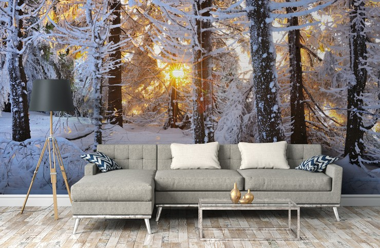 snowy forest with sunlight peeking through the trunks in grey, trendy lounge