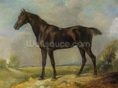 Golding Constables Black Riding-Horse, c.1805-10 (oil on panel) wall mural thumbnail
