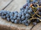 Wine Grapes wall mural thumbnail