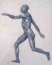 The Human Figure, lateral view, from the series A Comparative Anatomical Exposition of the Structure of the Human Body with that of a Tiger and a Common Fowl, 1795-1806 (graphite on paper) wallpaper mural thumbnail