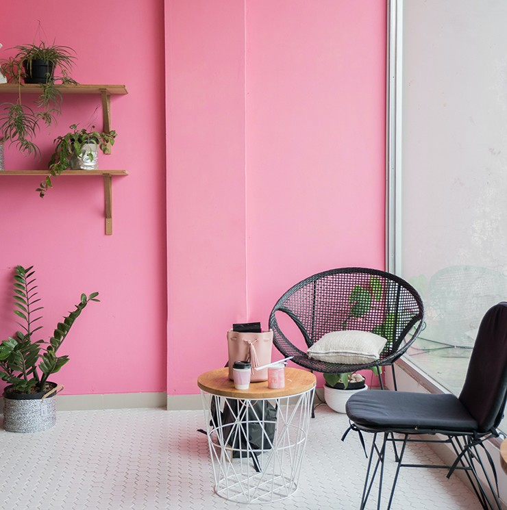 room with pink painted walls and green houseplants