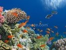 Tropical Fish on Coral Reef wall mural thumbnail