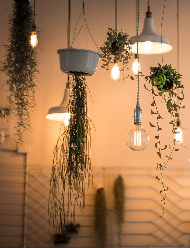 hanging plants with bulb lights