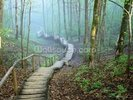 Foggy Forest Stairway wall mural thumbnail