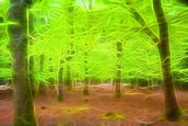 Light Beech Forest mural wallpaper thumbnail