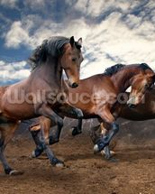 Jumping Bay Horses mural wallpaper thumbnail