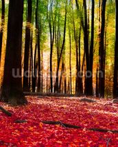 Colourful Autumn Forest mural wallpaper thumbnail