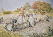 Digging Potatoes, 1905 wallpaper mural thumbnail