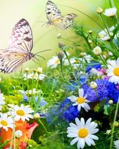 Butterflies and Flowers mural wallpaper thumbnail