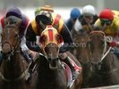 Horse racing winning 02 wall mural thumbnail