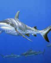 Shark School wall mural thumbnail