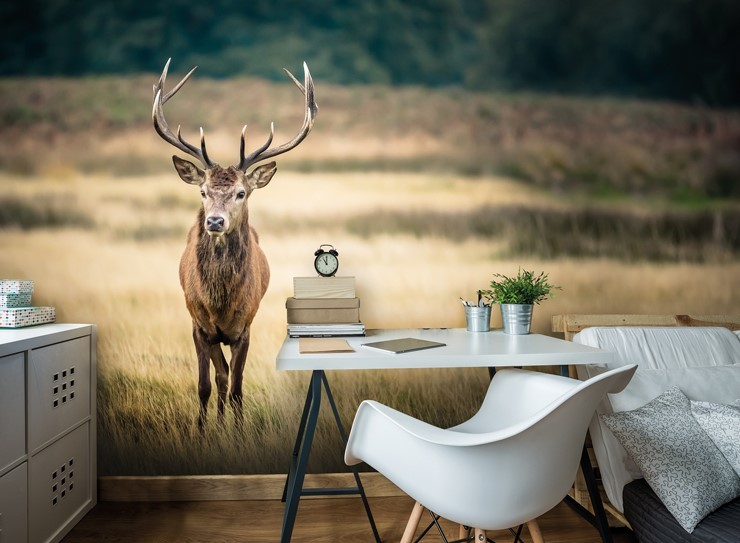 red deer in field wall mural with bedroom desk