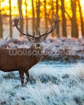 Red Deer Winter wall mural thumbnail