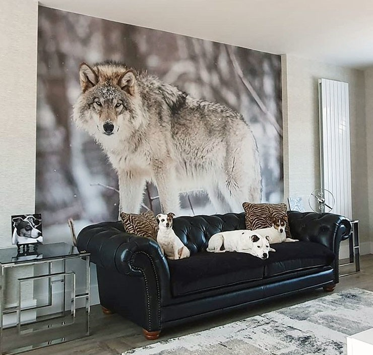 wolf stood in snow wall mural in black and white lounge with dogs led on black leather sofa