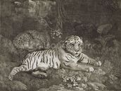 Two Tygers, engraved by the artist, pub. 1788 (etching) wallpaper mural thumbnail