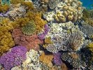 Coral Reef Garden wall mural thumbnail