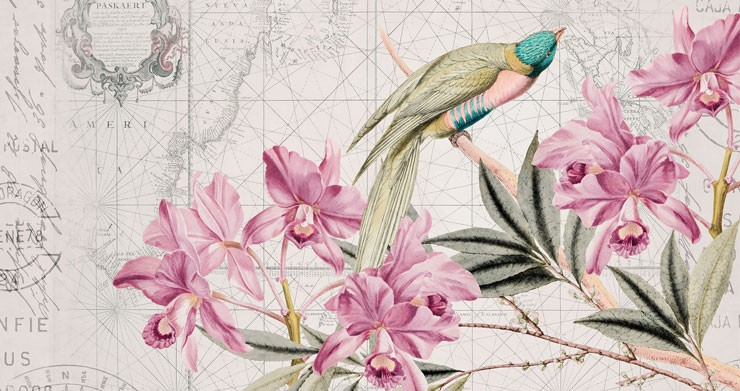 tropical floral and bird wallpaper with map background