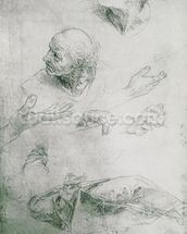 Studies for the Figure of Bramante (1444-1515) (pencil on paper) (b/w photo) mural wallpaper thumbnail