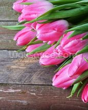 Pink Tulips Vertical mural wallpaper thumbnail